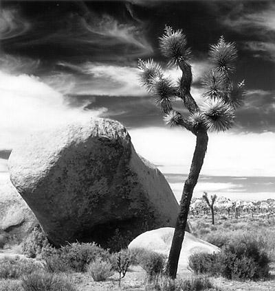 Boulder and Joshua Tree