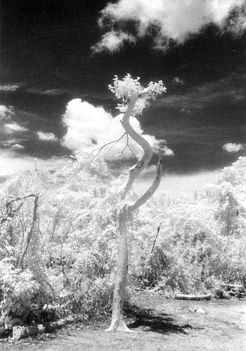 Ix Chel's Tree
